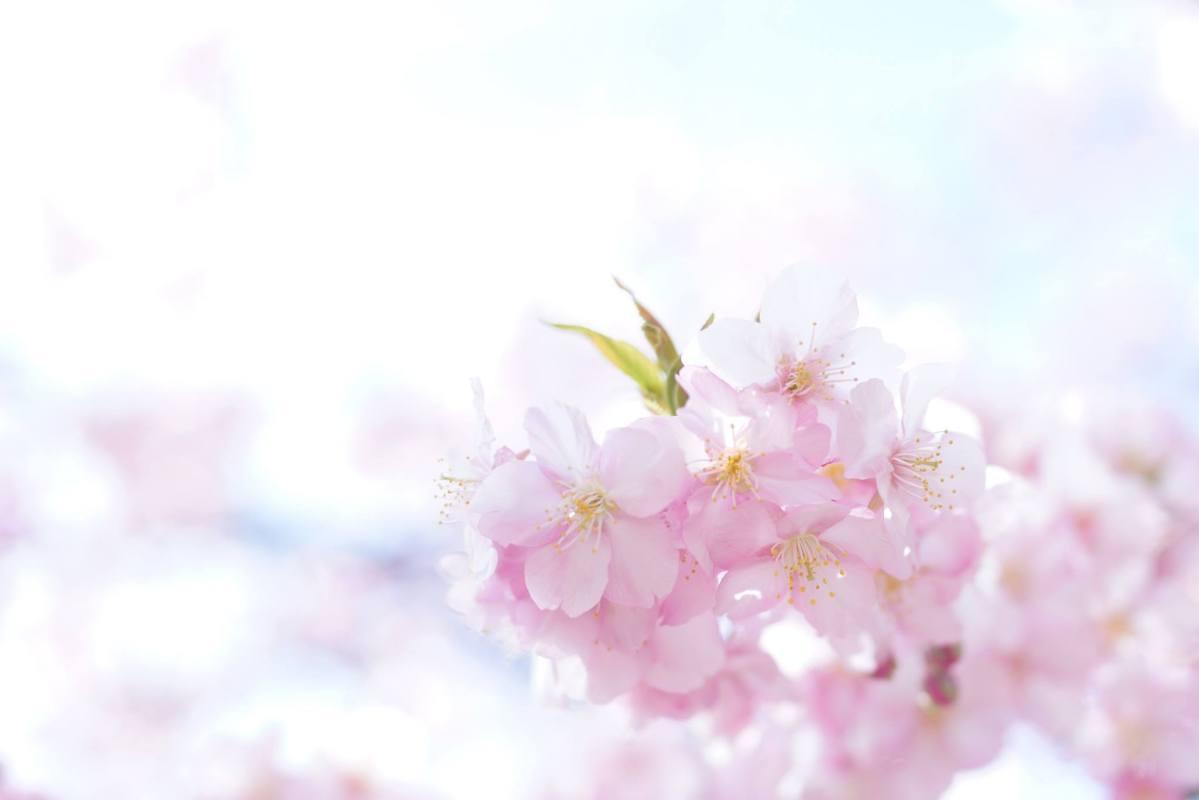 春らしい色で華やかに!TAKEFUストールアレンジ講座