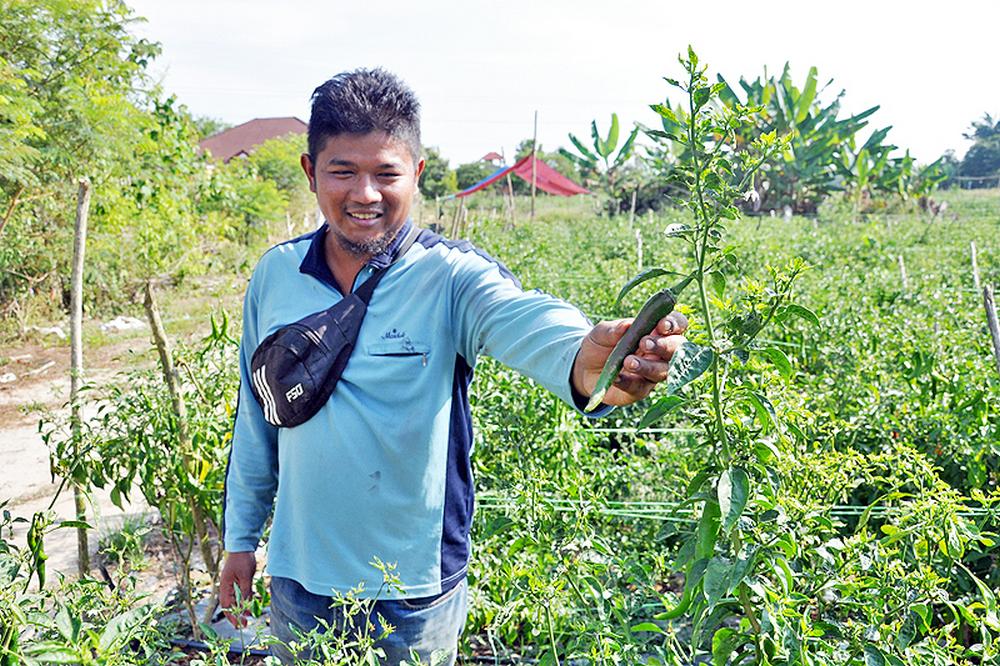 Tak bergaya dan mewah, tapi petani berstatus ijazah ini raih RM80,000 semusim!
