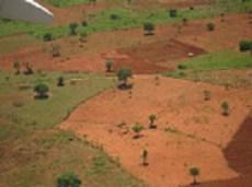 Togo farming