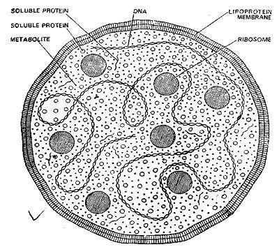 Electron Microscope Diagram, Electron, Free Engine Image