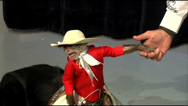 Taco Johns Whiplash Cowboy Monkey