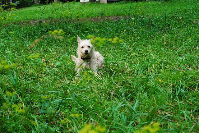 k-32_Emma liegt im Gras