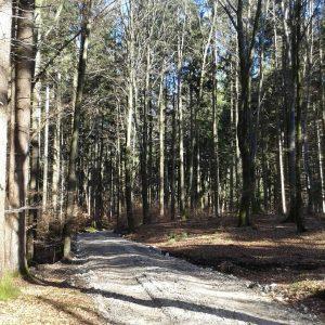 Der Wald von Aying
