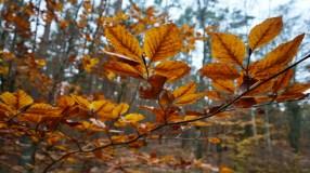 Waldgebiet im Nationalpark Vorpommerische Boddenlandschaft