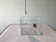 Installation Anna Werzowa