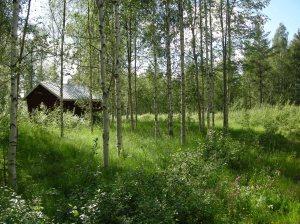Igenväxande åkermark  och en bod inom området för Nybodarna © Norrbottens museum