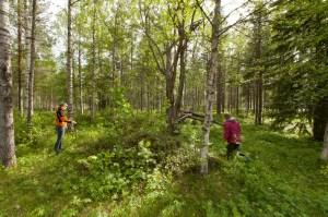 Rekognosering inför Arkeologidagen, ett område med husgrunder som kallas för Lövudden. Fotograf: Daryoush Tahmasebi © Norrbottens museum, Acc nr 2013_29_85