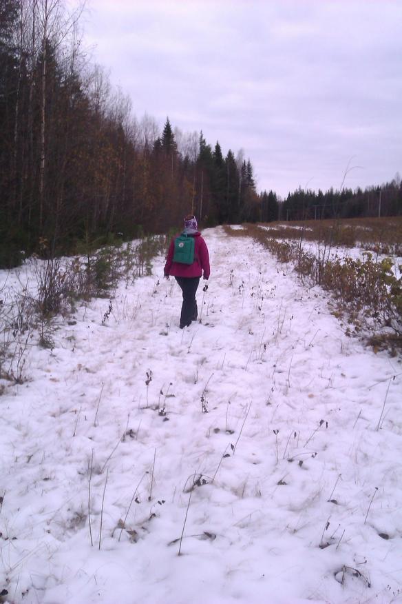 Nu får fältsäsongen vara över för i år! Vandring intill svartvinbärsodling © Norrbottens museum