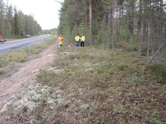 Arkeologerna Carina Bennerhag, Olof Östlund och Dag Lanz på en av de undersökta boplatserna längs väg 555 © Norrbottens museum