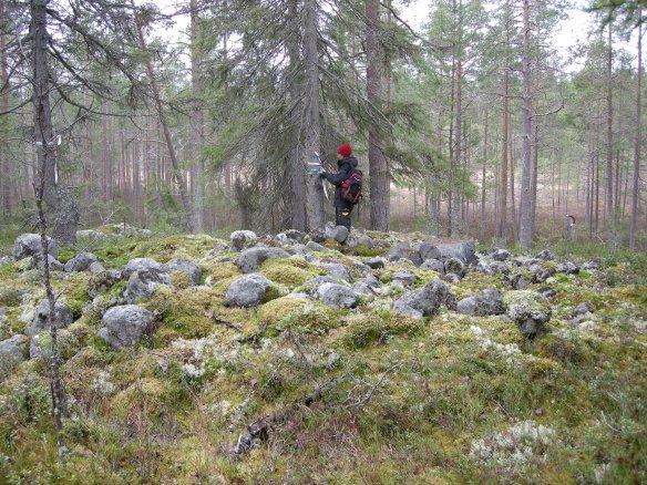 Utmärkning av fornlämning, inför avverkning. Foto: Carina Bennerhag, Norrbottens museum