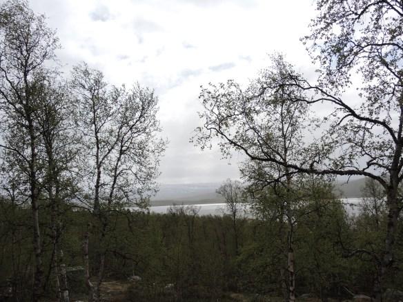 Utsikten från köksfönstret. Sjön Vuoggatjålme är full med vita gäss och björkarna svajar rejält i vinden.