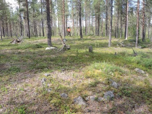 En stenring i förgrunden och så en härd i bakgrunden (där Olof står) registreras som ett viste. ©Norrbottens museum. Foto Frida Palmbo
