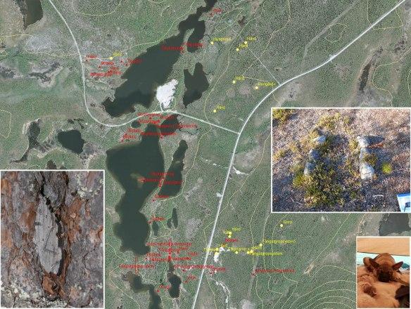Karta med fornlämningar och infällda foton på ristning, härd och valp
