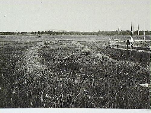 1977_826_2-3