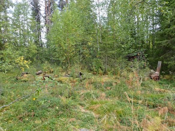 Husgrund inbäddad i grönska
