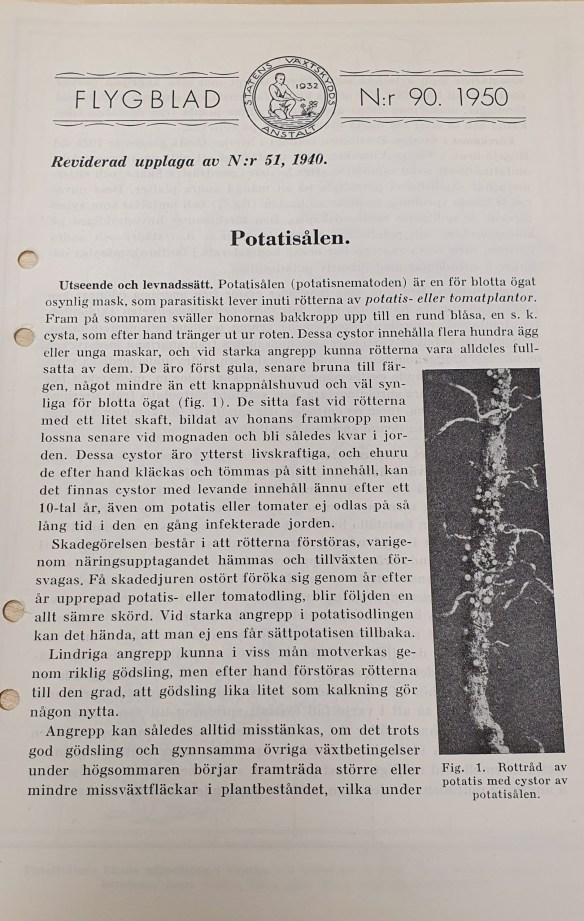 Råd potatissjukdom