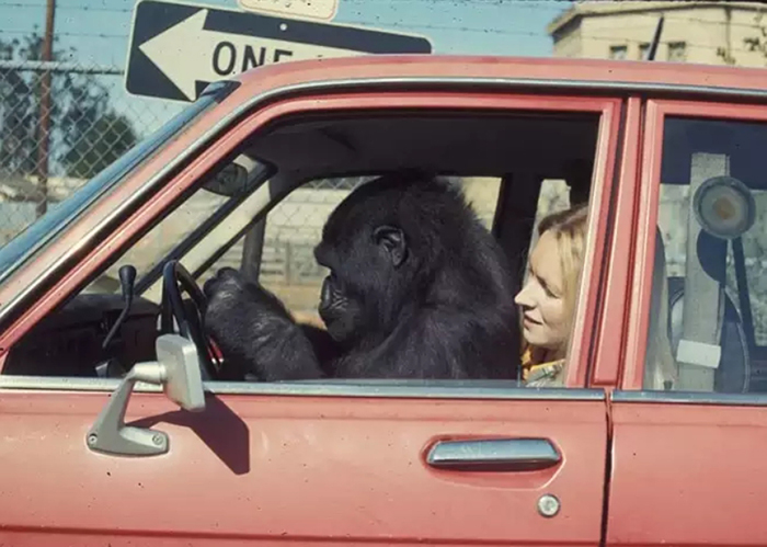 Коко и Пэнни отправляются на отдых.