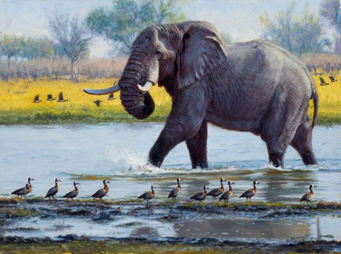 Слон. Автор: John Banovich.