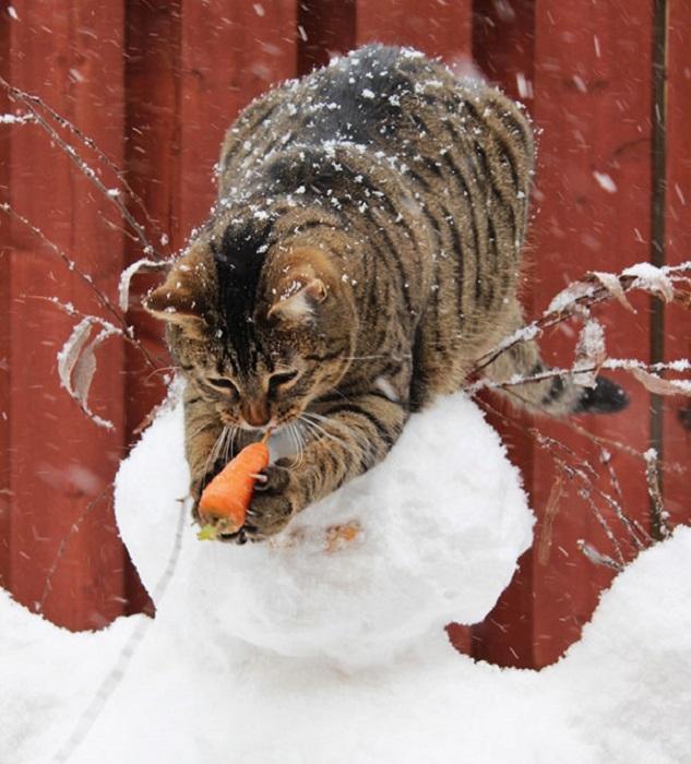 Пушистый любитель сладкой морковки.