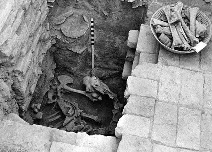 Кости верблюда, найденные здесь в 1950 году, оказались захоронением, сделанным в гораздо позднее время - после того, как древняя цивилизация погибла. Найдены и человеческие скелеты, но тоже не той эпохи. Видимо, в опустевший город позднее заселялись люди. /Фото:harappa.com