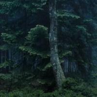 Preisträger des Evers-ReForest® Landschafts- und Naturfotografie-Wettbewerbs wald|raum stehen fest #Kunst #Kultur #Fotografie