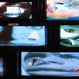 Harburg | Phoenix-Hallen | The Palace at 4 A.M. lautet der Titel der variablen Videoinstallation, die Jon Kessler auf 1000 qm in den Räumen der Sammlung Falckenberg installiert hat. 2005/2006 wurde sie bereits im Projektraum P.S.1 des MoMA in New York gezeigt und untersucht die gesellschaftliche Rolle der Medien als Instrument der Meinungsbildung und der Überwachung in Politik und Werbung.