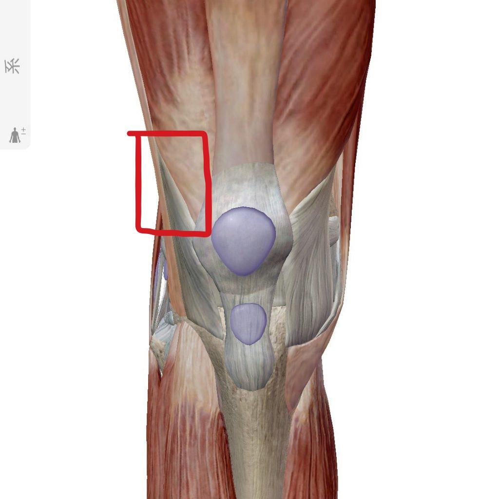 【膝(ひざ)・お皿の下が痛い】 ~外側膝蓋支帯編~ | total-body-support-ebmのブログ