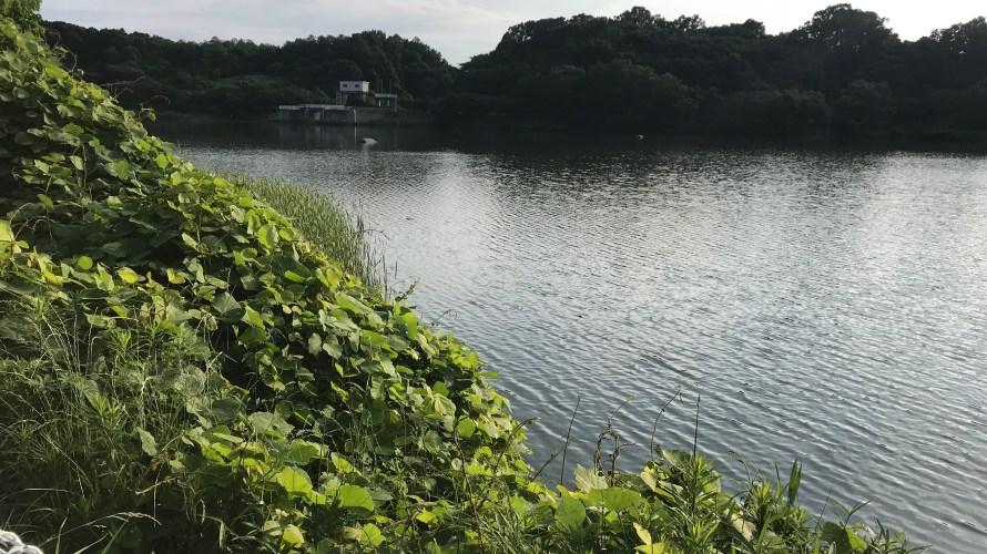 つくし湖のバス釣りで50UPが釣れるのは本当?つくし湖に実際に行ってみた