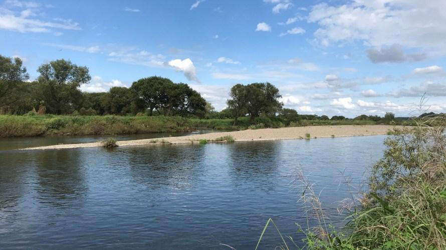 思川のバス釣りに挑戦したら意外な魚を発見!思川バス釣りの特徴とは?