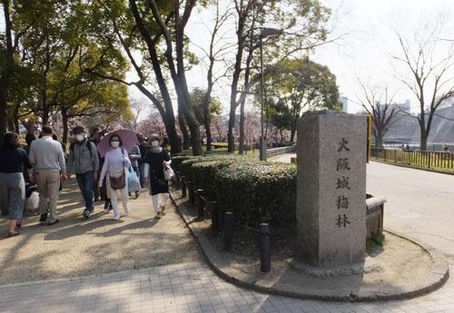 大阪城公園 梅林