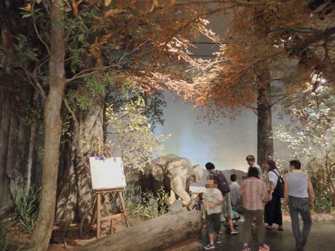 琵琶湖博物館 A展示室