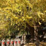 【関西の紅葉情報】穴場は?見ごろは?熊野古道に近い子授け銀杏や滝のスポットがオススメ!