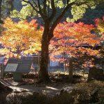 【関西の紅葉ハイキングコース】秋の熊野古道おすすめ!見頃情報とアクセス