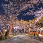 関西の桜の名所と穴場スポット2019!見頃とライトアップ情報!