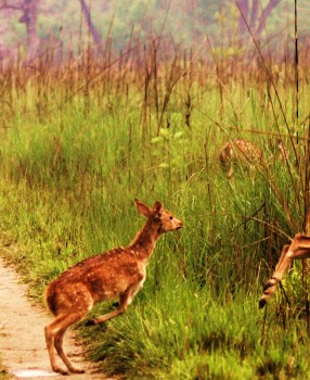 Things to do in Bardia National Park