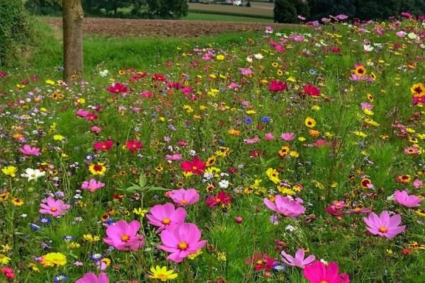 Zielgruppe vs Wunschkunde - Blumenwiese bei Instagram, barba_ra