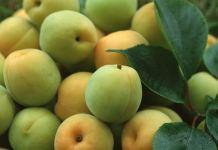 Недозрелые фрукты