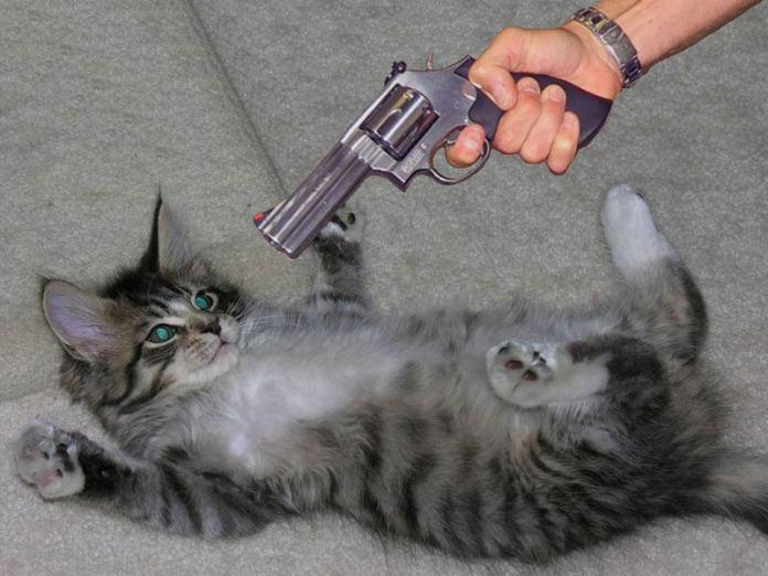 наказывать кота