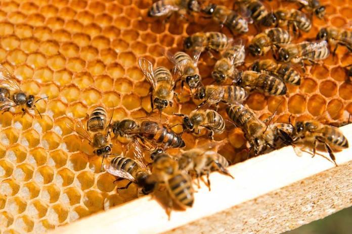 Что делать если ужалила пчела?