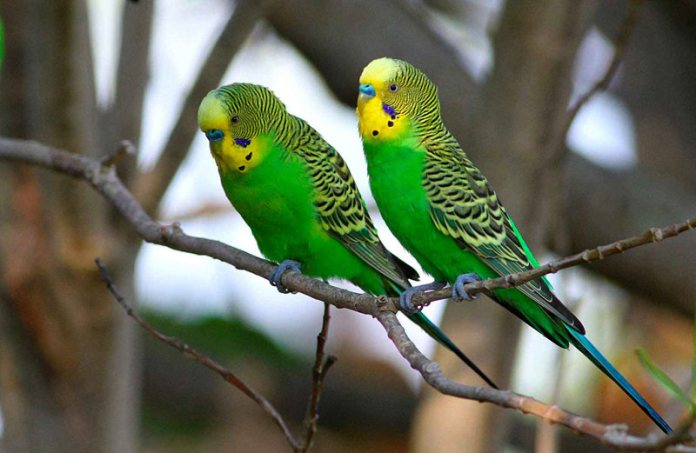 Пение птиц может вылечить от недугов