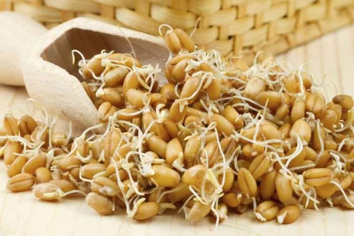 проростки зерна