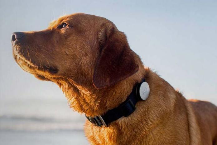 Собачий GPS ошейник