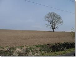 美瑛 哲学の木
