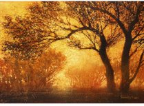 goldene-nebel_2
