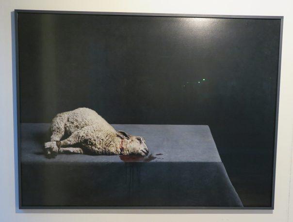 Lamb - Stephan Vanfleteren - 2016