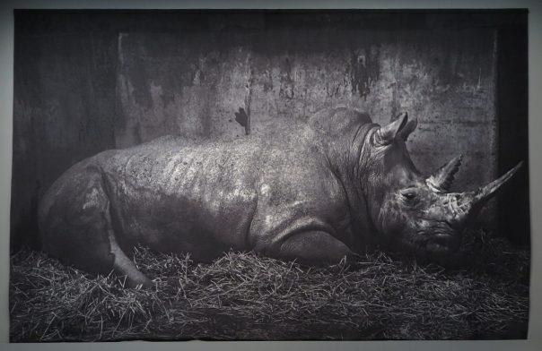 Zoo - Craigie Horsfield - 2007