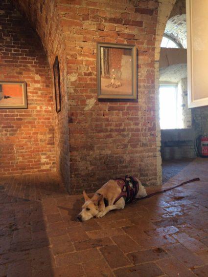 Hond in museum. Lars Lerin maakt waanzinnige aquarellen en in het Marstrand Hembygdsförening zag ik in 2014 prachtig fotowerk van hem. En de hond van mijn Zweedse vriendin mocht gewoon meekijken in dit fort/museum.