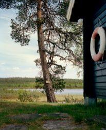Jeroen Toirkens uit de serie Borealis Noorwegen, Øvre Pasvik Boreal tree # 3