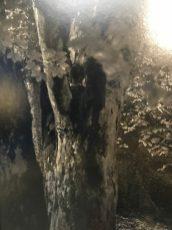 """Erwin Olaf, detail In der Abenddämmerung. """"..een donkere vlek in de boom, een uil ;-)"""""""