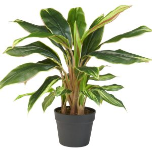 Kunstplant Cordyline breedbladig (65 cm) - Kunstplantshop.nl